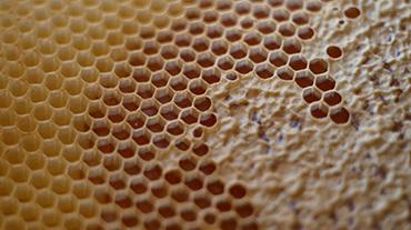 Medová plástev